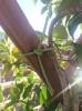 Legaccio per Giardinaggio