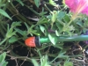 Tubetto per Irrigazione
